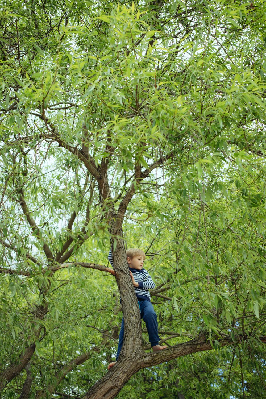 Junge steht oben im Baum und schaut in die Ferne, Elbstrand